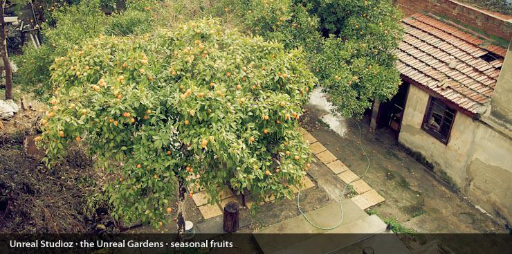 unreal_gardens_captions_004
